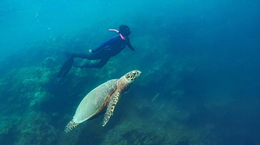 freediving in Moalboal