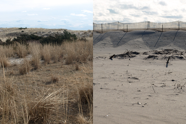 One of the East Coast's many rapidly changing barrier islands: Fire Island, New York in January, 2010 (left) and November, 2013 (right) image: Alexandra Hay