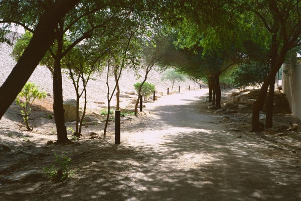 Shaded trail image: Erik Mustonen