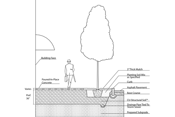 Cross-section of typical tree installation into CU-Structural Soil™. Note where the tree pit is open, topsoil should be placed around the tree ball, but CU-Structural Soil™ should be placed under the ball to prevent tree ball subsidence. image: Nina Bassuk