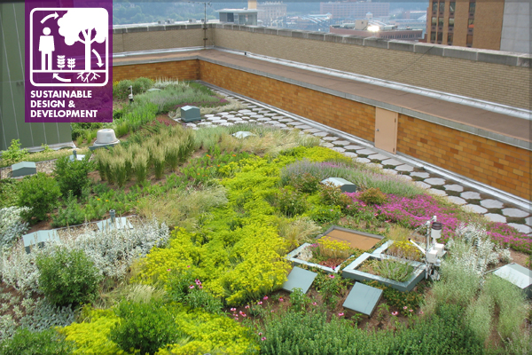 Foreground: intensive green roof and microcosm trials image: John K. Buck, Civil & Environmental Consultants, Inc.