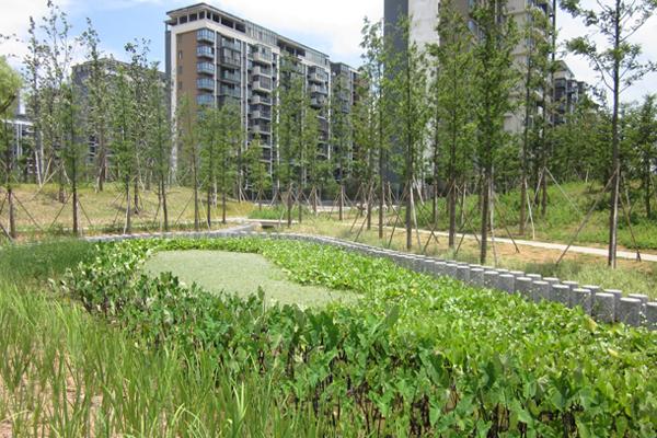 A rain garden in Ningbo Eco-corridor, Ningbo, Zhejiang Province - ASLA 2013 Analysis and Planning Honor Award Winner Photo: Chih-Wei G.V. Chang, SWA Group