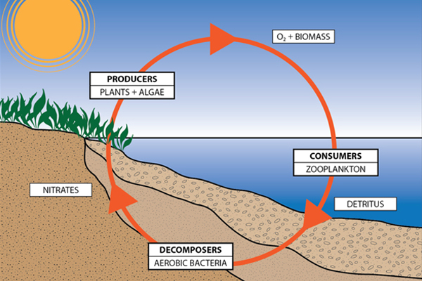 Biological cycle of producer, consumer, and decomposer   image: CMS