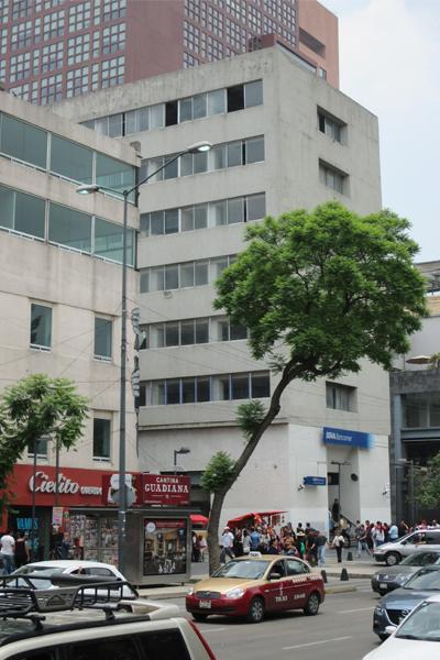 Urban tree, Avenida Juárez, central Mexico City image: Erik Mustonen