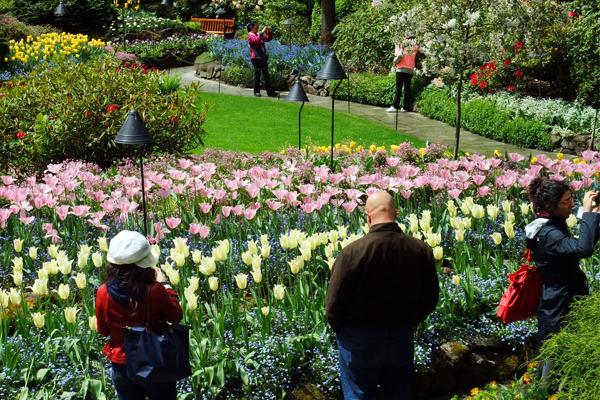 Figure 2. Butchart Gardens in May image: David Hopman
