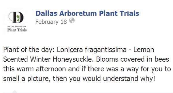 Figure 4: Dallas Arboretum message promoting exotic and invasive Winter Honeysuckle image: David Hopman