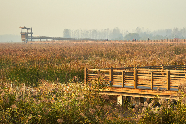 Weishan, Shandong Province, China - Weishan Wetland Park, 2015 Honor Award, General Design Category image: Zhao Jie (AECOM), Scott Burrows (consultant), Wei Shan Photography Association