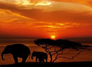 elephant-1240011_1280