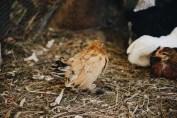 Cuckoo and her furry feet