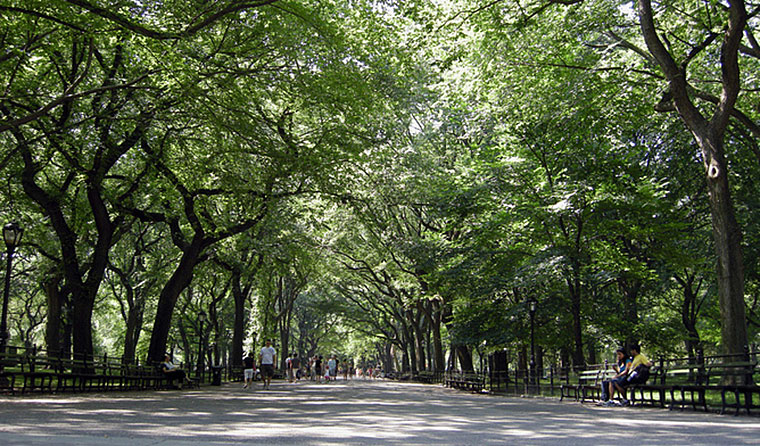 A tree canopy looks nice, but where is the air pollution supposed to go?  Brian Hillegas, CC BY