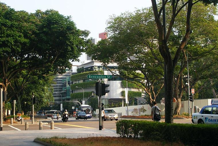 Street trees and green walls helping to reduce urban temperatures. Tony Matthews