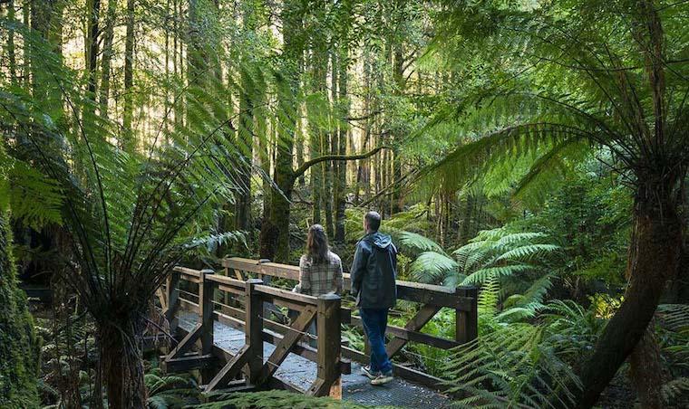 couple walking through victorian rainforest