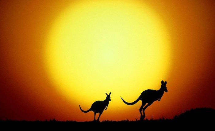 jumping kangaroo sunset