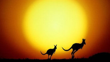 jumping kangaroo sunset