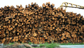 timber farm industry