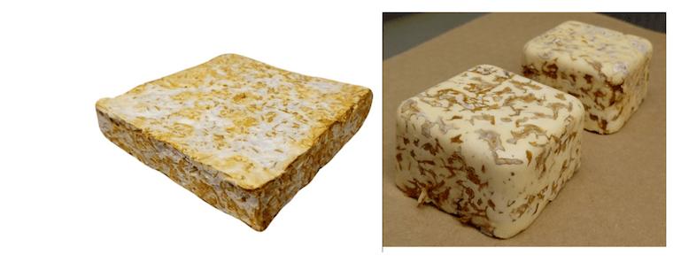 Fungal brick prototypes