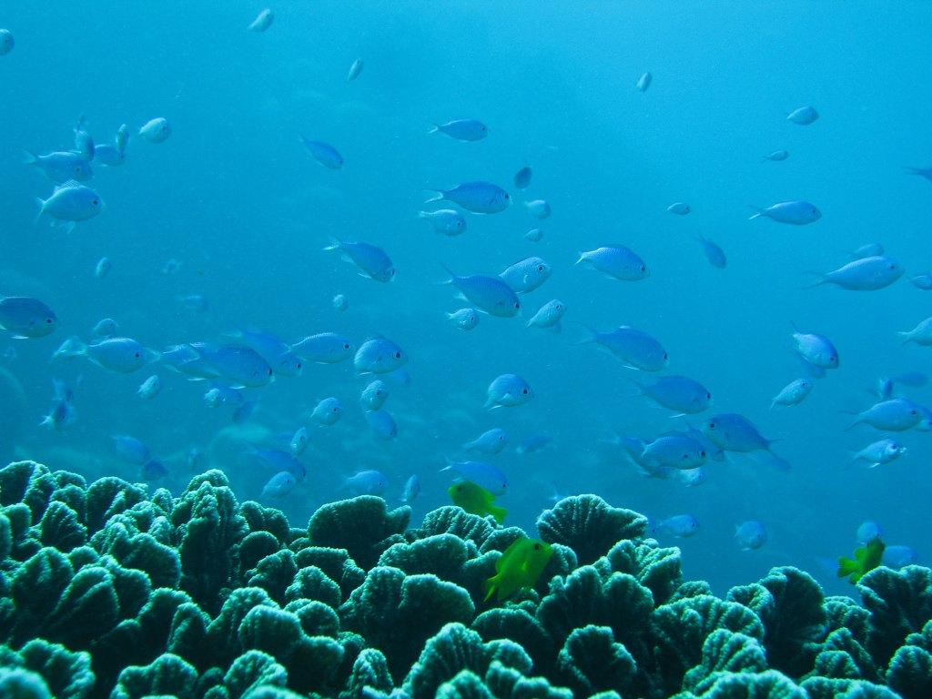 Ningaloo Reef oxygen files