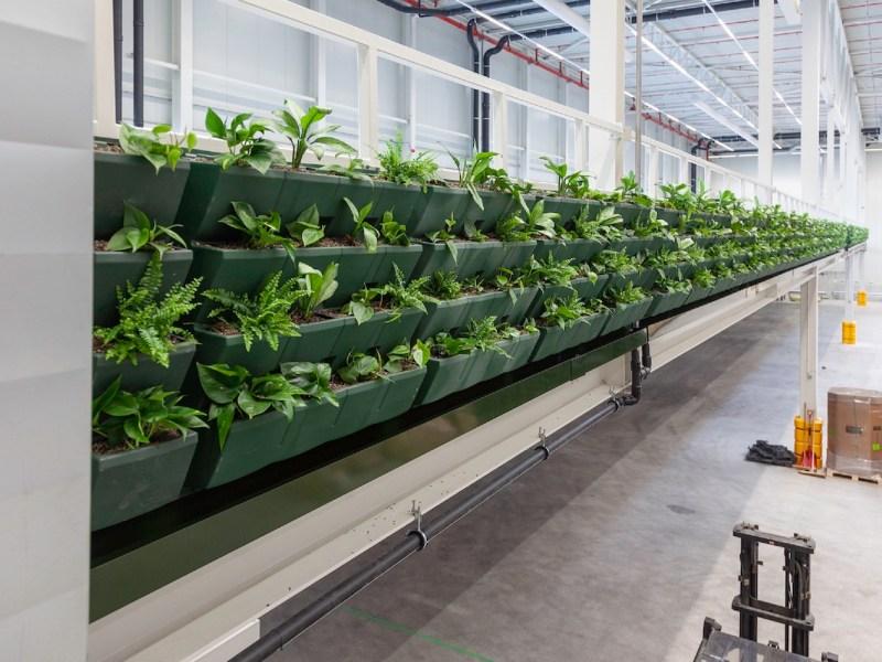 plants in warehouse