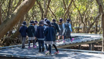 school children walking mangroves