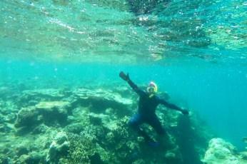 Reef42