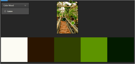 inspired-colour-scheme-for-garden