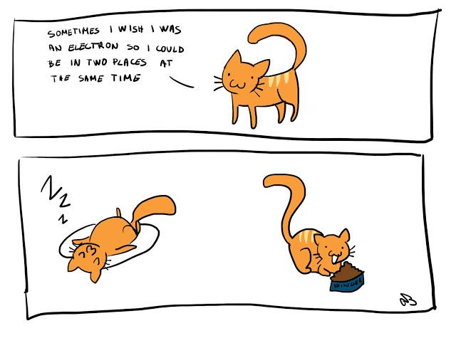 science caturday adventures of
