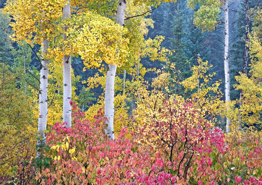 Autumn Colors Hanna Canyon