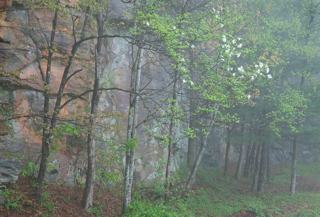 Rock Wall and Dogwood #2