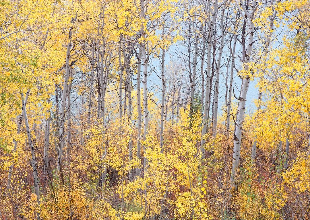 Swan Valley Autumn Portrait #6