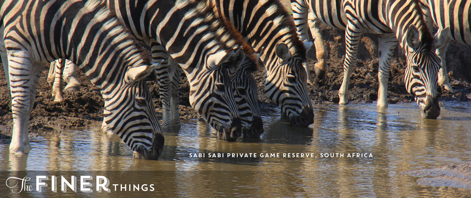 Sabi Sabi Private Game Reserve - The Ultimate African Safari‎