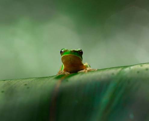 Tamborine National Park, Queensland, frog, wildlife, Danielle Lancaster