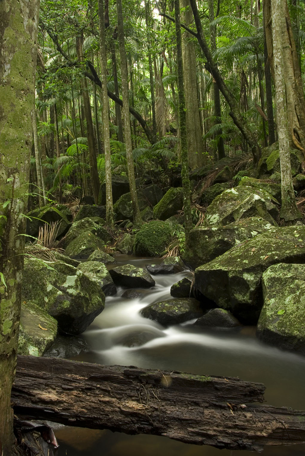 Tamborine National Park, creek, rainforest, Danielle Lancaster