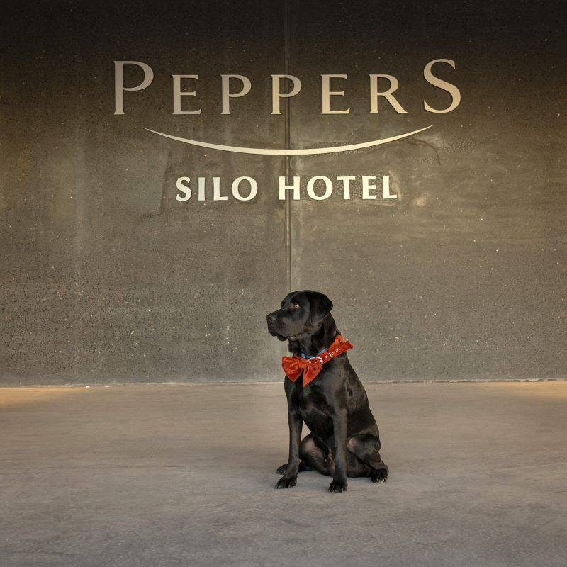 Peppers Silo Hotel, Launceston, Tasmania, dog friendly hotel