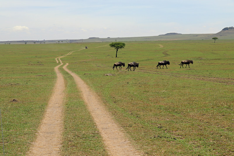 Kaskaz Mara Camp, Serengeti, Serengeti National Park, Africa, Tanzania, Maasai Wanderings, wildebeest, Great Migration