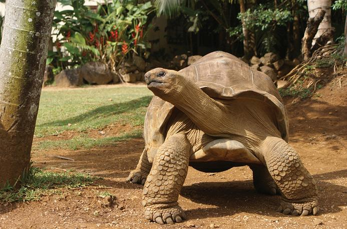 Curieuse Island, Seychelles, giant turtle, sailing, Sunsail