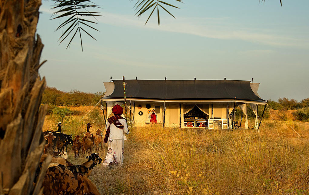 Sujan Jawai Leopard camp in India, Arcadia Expeditions
