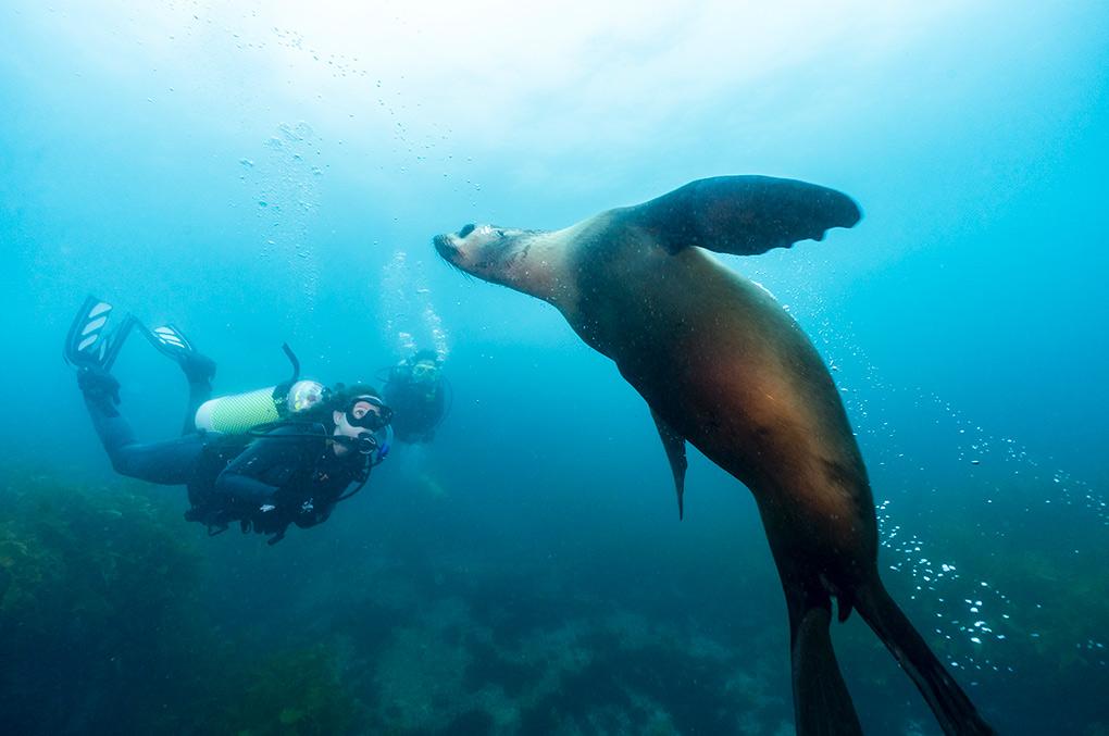 Montague Island, Sapphire Coast, Love NSW, Tourism Australia
