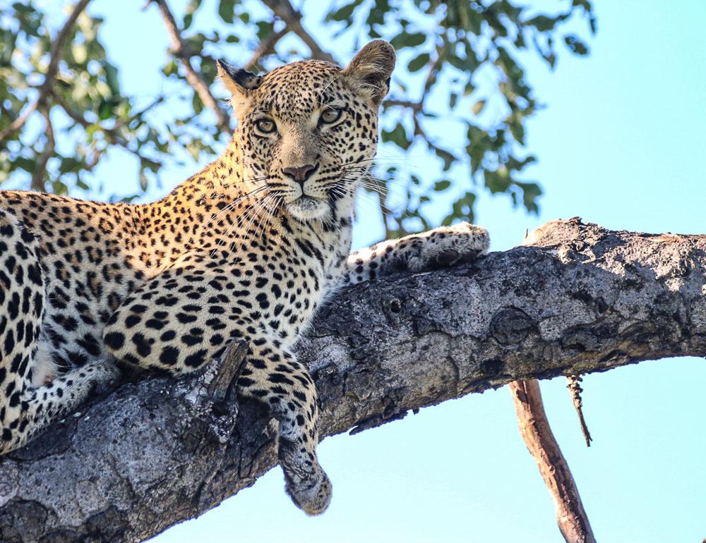 South Africa, Sabi Sabi Private Game Reserve