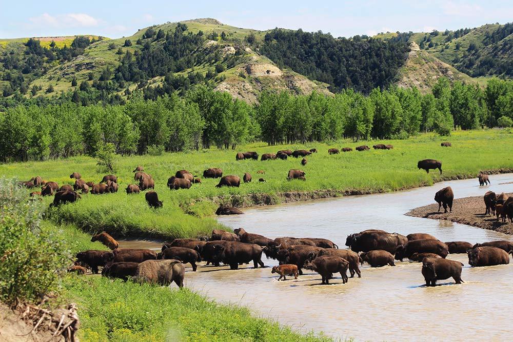 Theodore Roosevelt National Park, North Dakota, Be legendary, Great American West