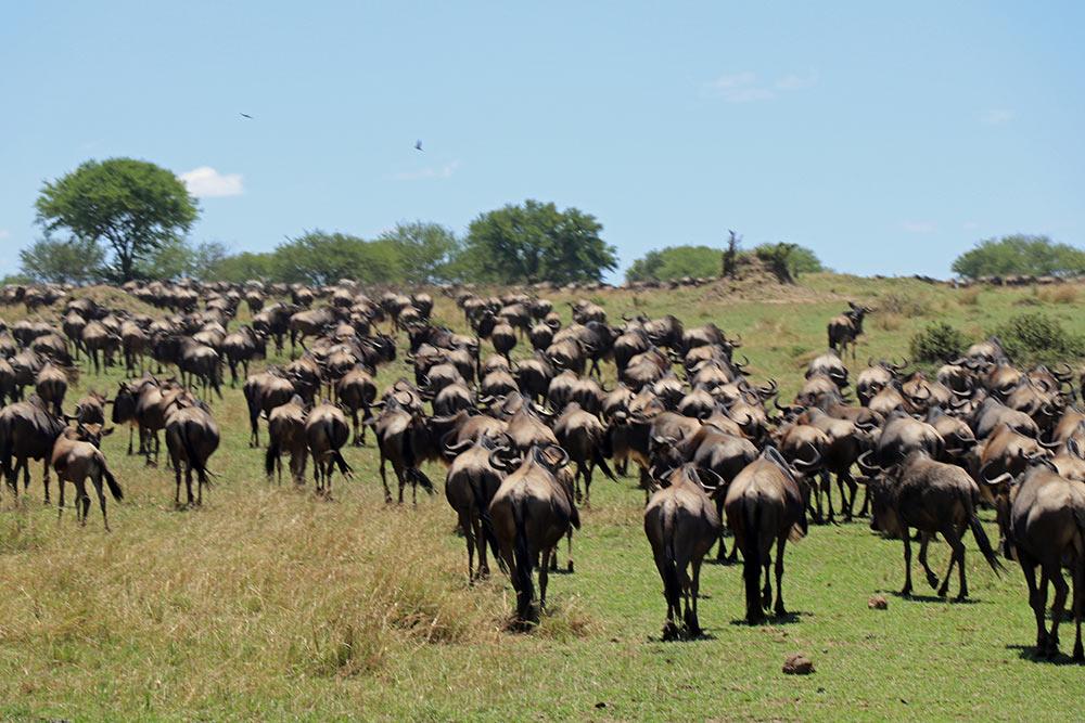 Nasikia Camps, Serengeti, Maasai Wanderings