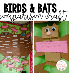 birds and bats comparison chart and writing craft in a whole group setting compare and contrast birds and bats using a venn diagram  [ 1004 x 1002 Pixel ]