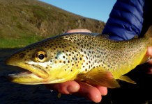 Brown Trout Life Cycle