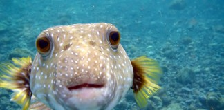Marine Aquaria
