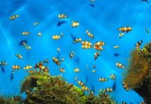 Perfect Lighting for your Aquarium