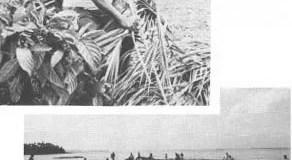 Leaf Sweep Fishing of Hawaii and Palau