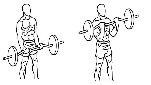 EZ bar biceps curl