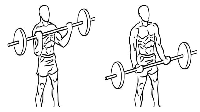Standing Barbell biceps curl: