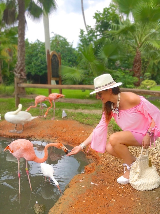 Flamingo Style en Floride