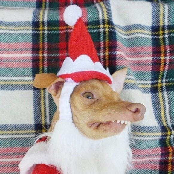 Cutest Dogs On Instagram RN