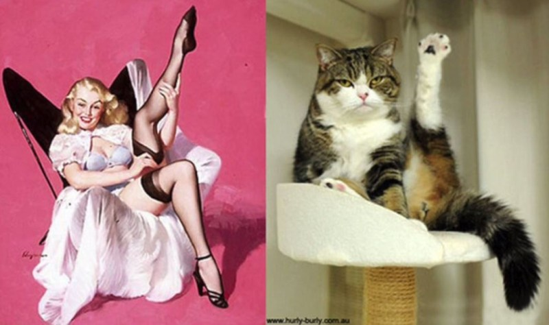 Cats Do Pin Up Girl Poses